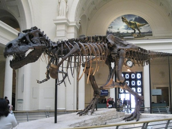 The Field Museum Chicago sports teams travel guide